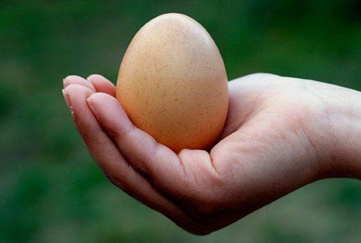 اثرات تخممرغ بر روی سلامت